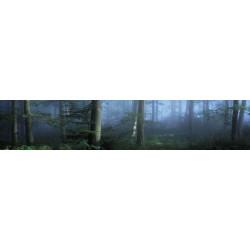 Brise vue paysage brumeux dans la forêt