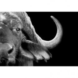 Black and white buffalo design canvas print