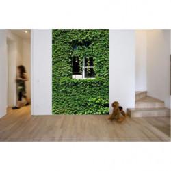 Wallpaper trompe l'oeil window in the vineyard