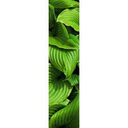 Papel pintado vegetal, hojas verdes gigantes