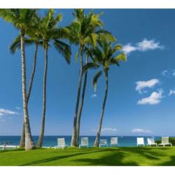 Póster de palmeras junto al mar