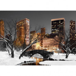 Picture NYC Central park in winter
