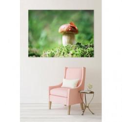 Tableau photo d'un champignon en forêt