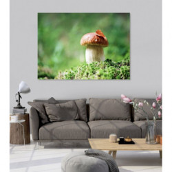 Picture of a mushroom in the forest