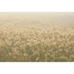 Nature and wheat canvas print