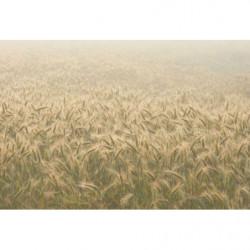 Tableau nature et blés