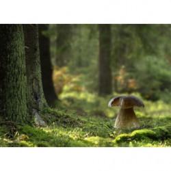 Cuadro en lienzo fotográfico del bosque