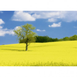Painting field with yellow flowers
