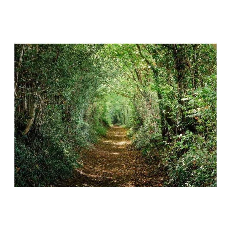 Tableau Chemin vert