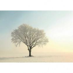 Poster géant photo d'un arbre en hiver
