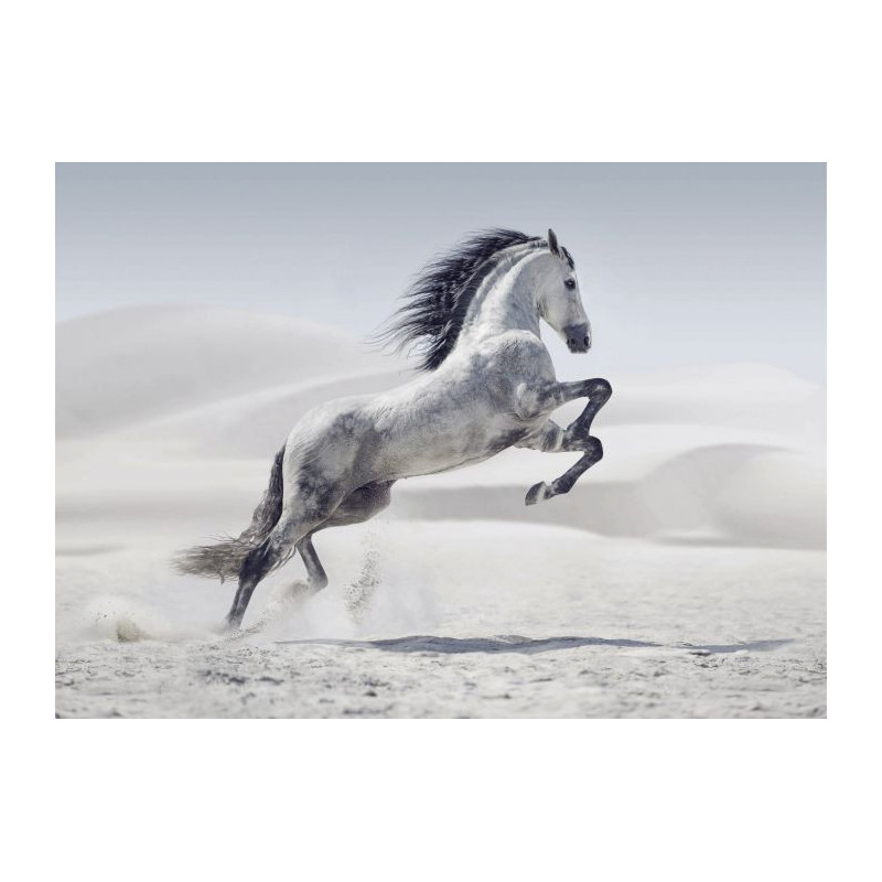 Cheval dans le d sert tableau grand format cambrure du cheval - Tableau de cheval ...