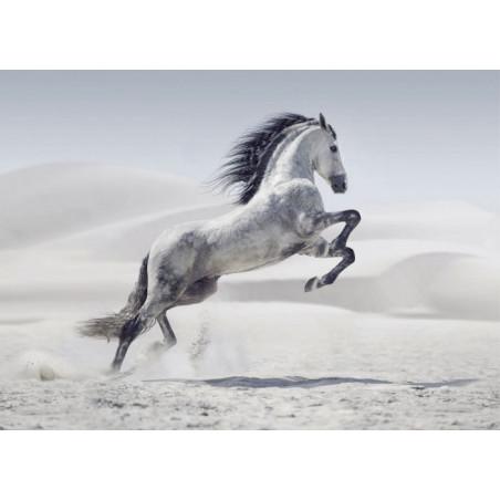 HORSE IN THE DESERT Canvas print