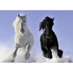 Tableau chevaux blanc et noir