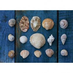 Cuadro de conchas marinas XXL