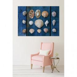 canvas print XXL marine shells
