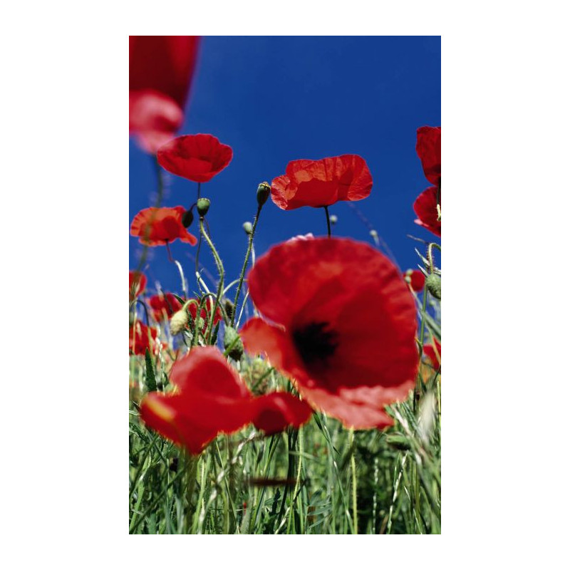 COQUELICOT wall hanging