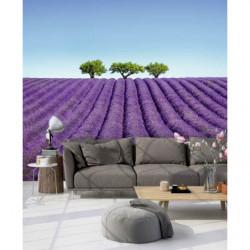 Póster paisaje lavanda violeta