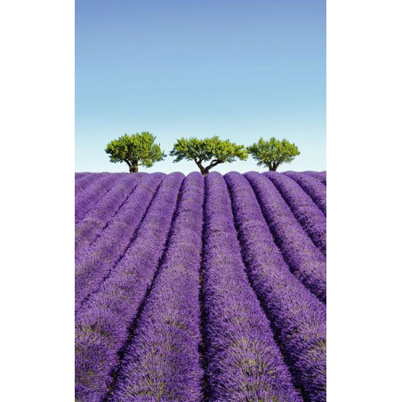 COLOUR LAVENDER wall hanging