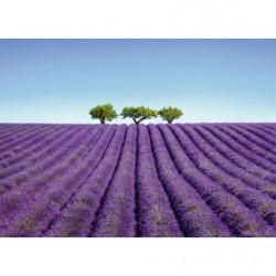 XXL painting lavender field
