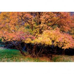 Nature painting autumn landscape
