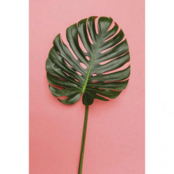 Tropical style canvas print with giant leaf