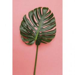 Tableau style tropical feuille géante