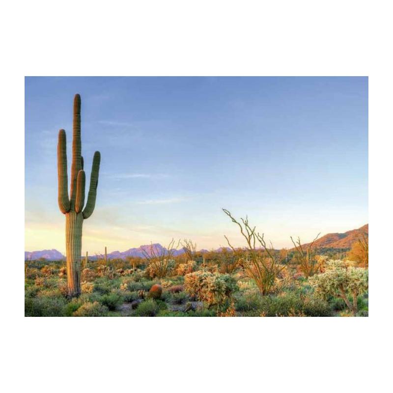 SORONA DESERT canvas print