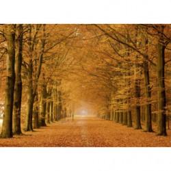 Bosque naranja en otoño