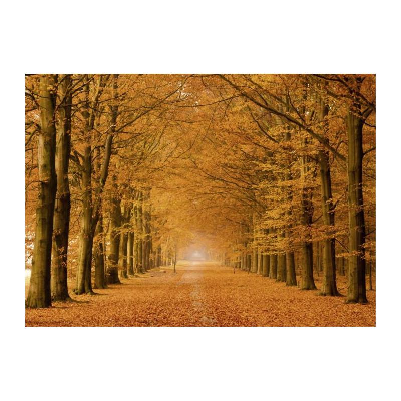 Tableau forêt en couleurs