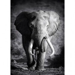 LONE ELEPHANT Canvas print