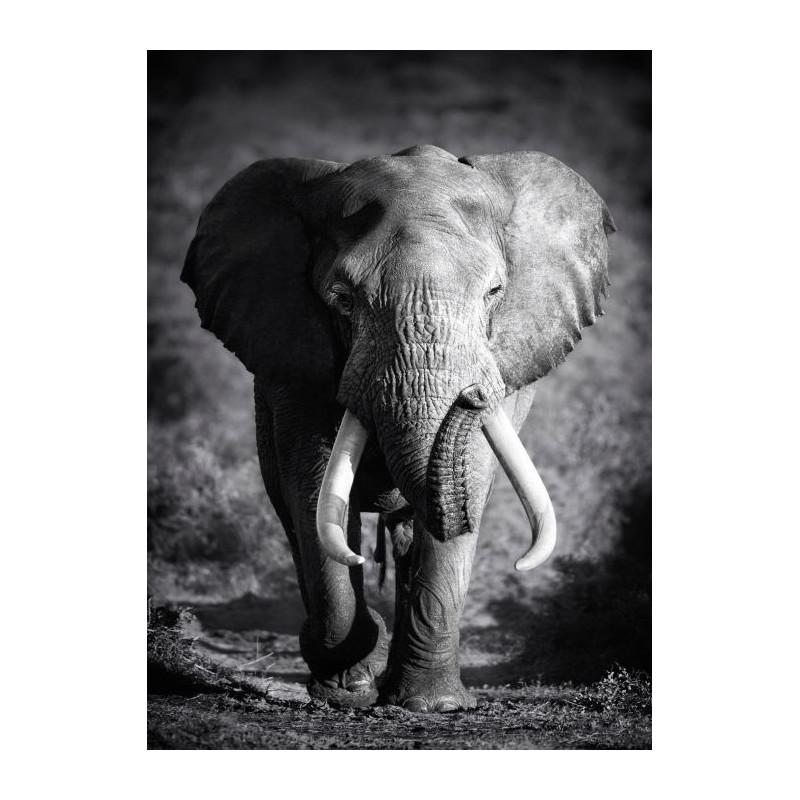 ELEPHANT SOLITAIRE