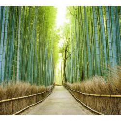 Papier peint paysage bambou