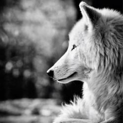 Tableau chien noir et blanc