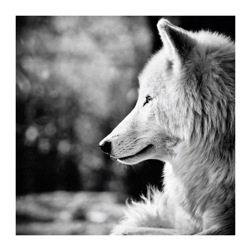 BETWEEN DOG AND WOLF Canvas print