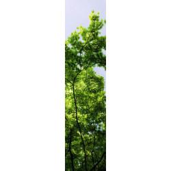Lé de papier peint feuillage d'arbre