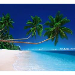 Photo géante palmiers exotiques en bord de mer