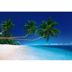 Tapisserie panoramique palmier exotique sur la plage