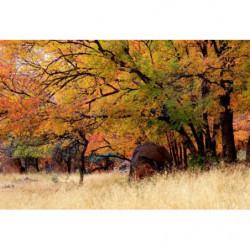 Tableau paysage de nature en automne