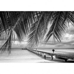 Poster paysage tropical noir et blanc