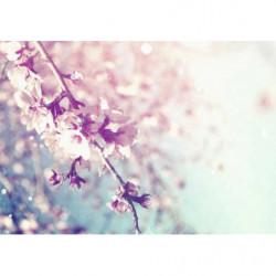 Poster fleurs pastel cerisier du Japon