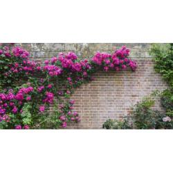 Brise vue FLOWERS WALL