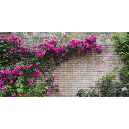 FLOWERS WALL Privacy screen