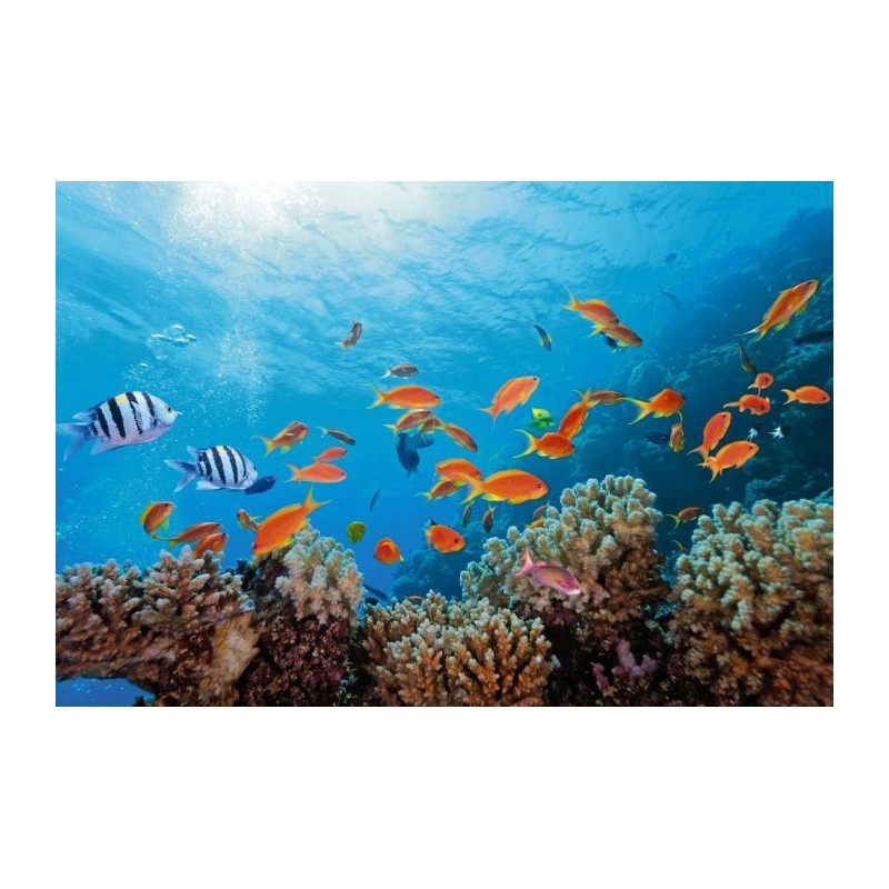 tableau toile poissons exotiques et coraux dans les fonds. Black Bedroom Furniture Sets. Home Design Ideas