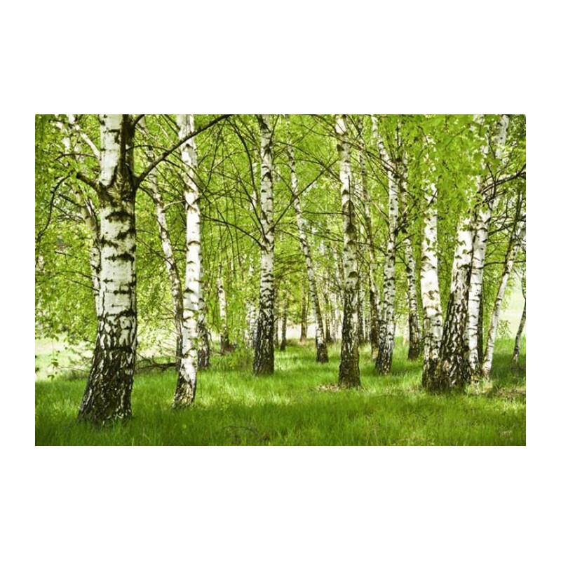 Papier Peint Panoramique Paysage Nature Arbres Dans La Foret