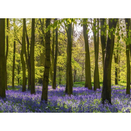 HYACINTH FOREST Canvas print