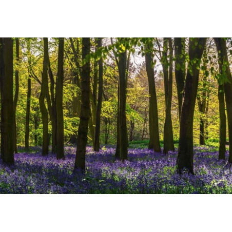 HYACINTH FOREST Poster