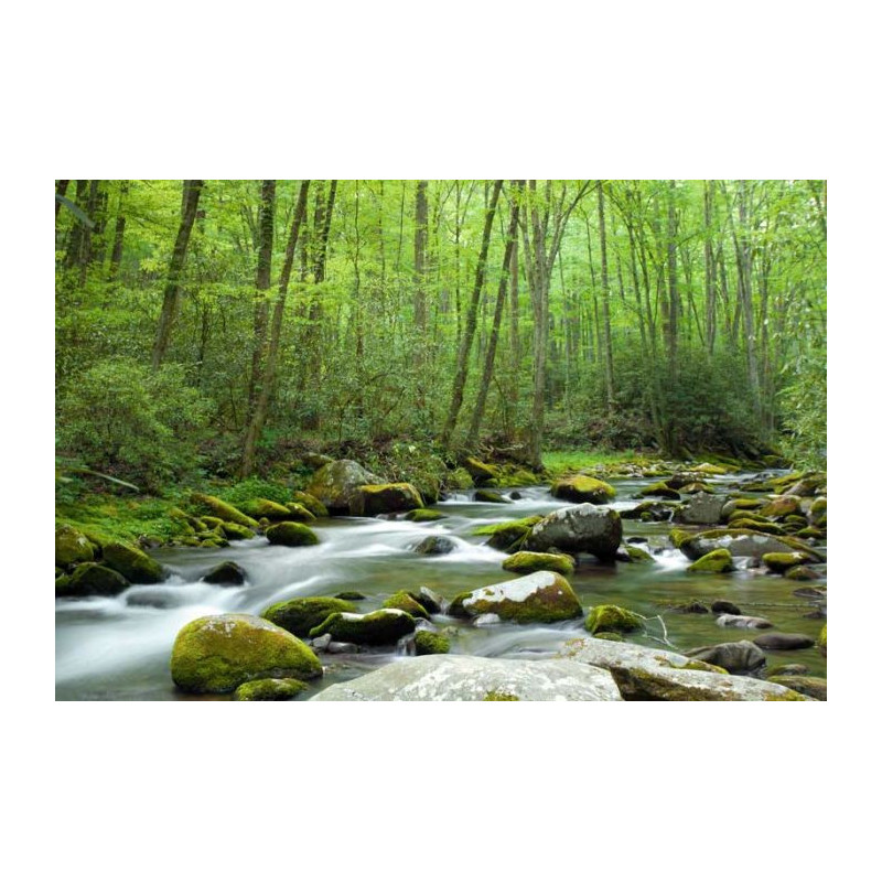 Poster foret d coration murale g ante paysage de nature for Decoration murale 4 murs