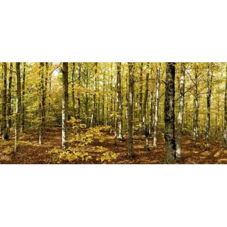 VENTOUX FOREST Wallpaper