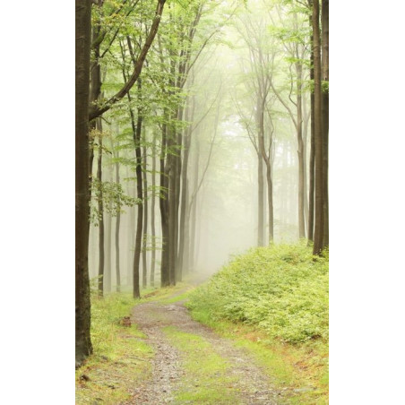 MYSTERIOUS FOREST Wall hanging