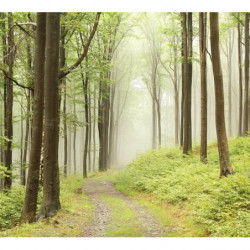 Papier peint forêt verte et humide